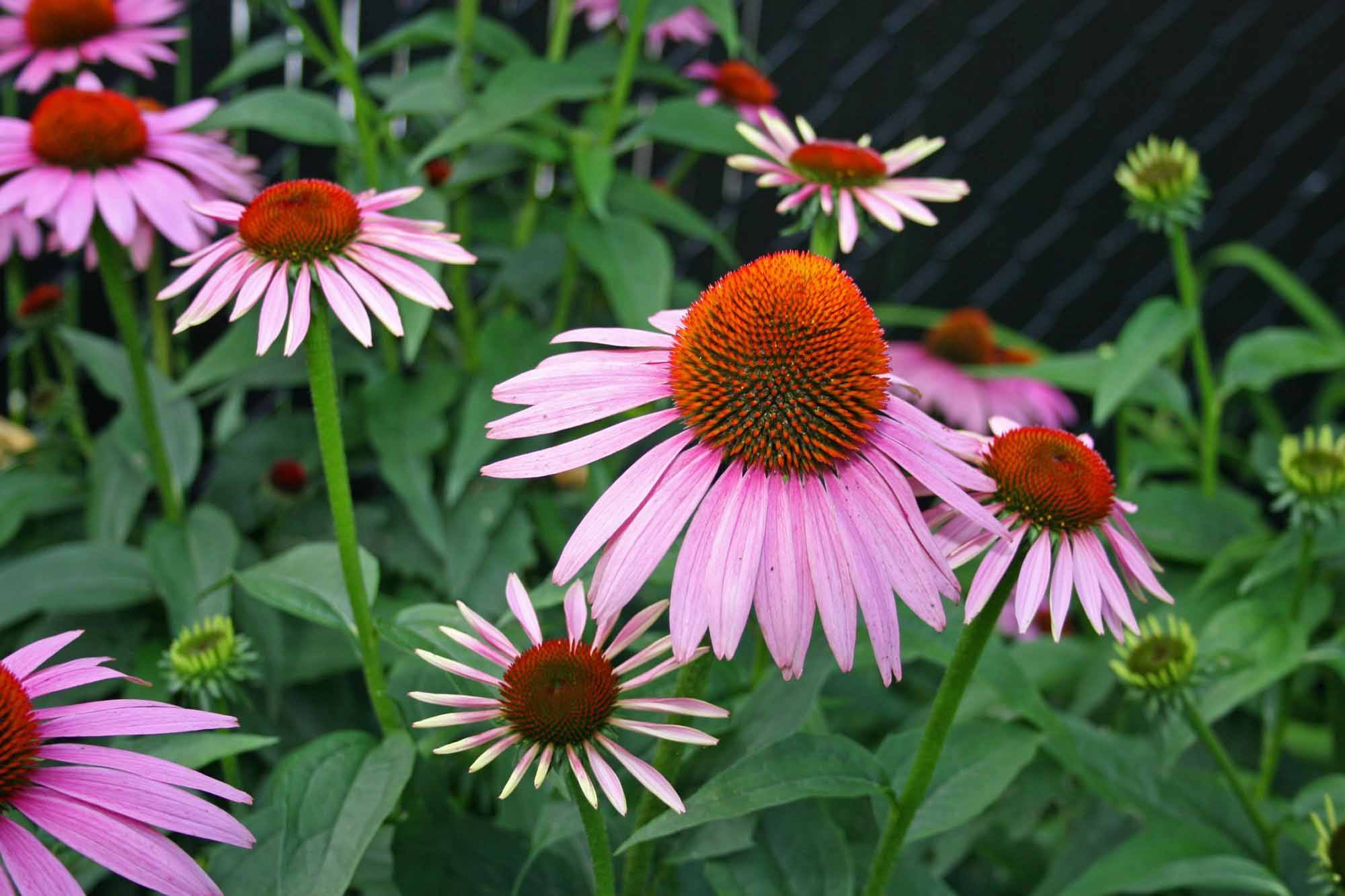 going native  our top 10 native plants for houston
