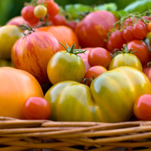 Tomatoes - Recipe for Success